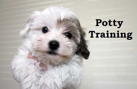 How-to-potty-train-a-puppy-at-home-with-simple-tips