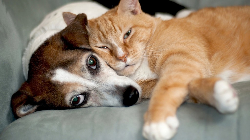 Cats get along better with dogs than with another cat