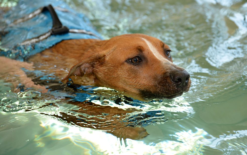 Hydrotherapy Treats Dogs in an Efficient and Comfortable Way