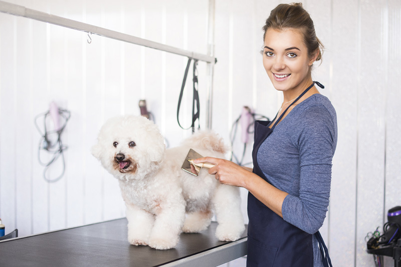 Tips for Finding the Best Mobile Pet Groomer in Your Area
