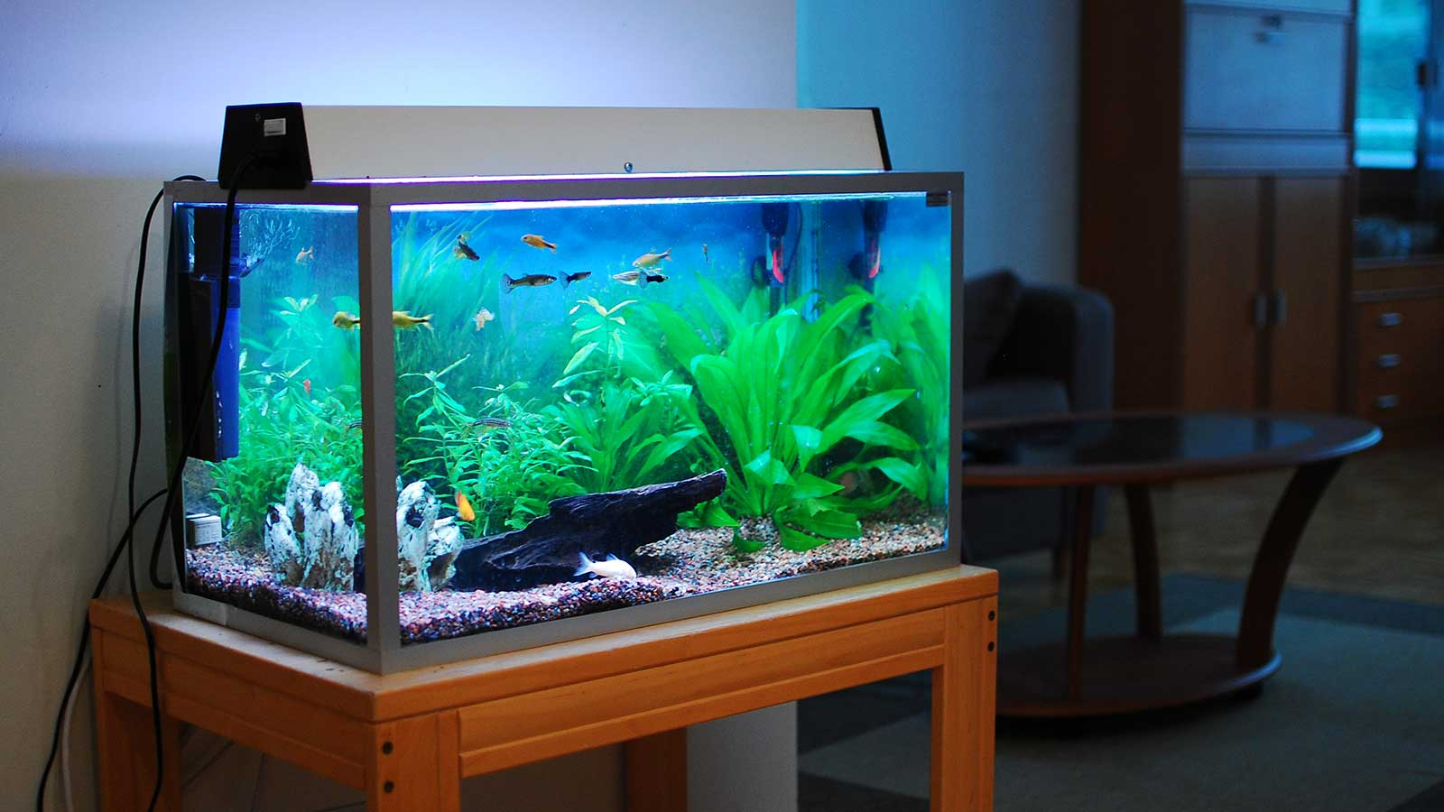 Tips on How to Buy an Aquarium