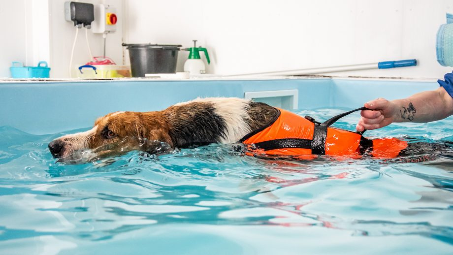 How to Find the Best Canine Hydrotherapy Services Near You