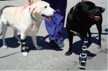 Do Orthopedic Knee Braces Help Dogs