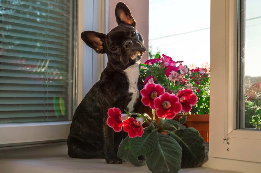 Why-Do-Dogs-Eat-Plants